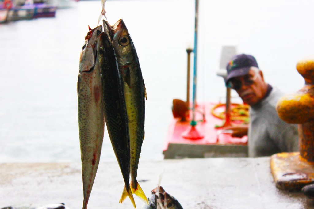 Fish bunch