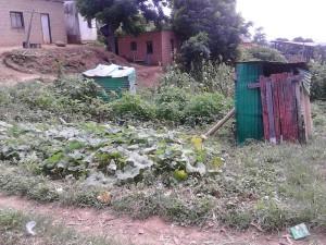 Magubane veg garden [Zimasa]