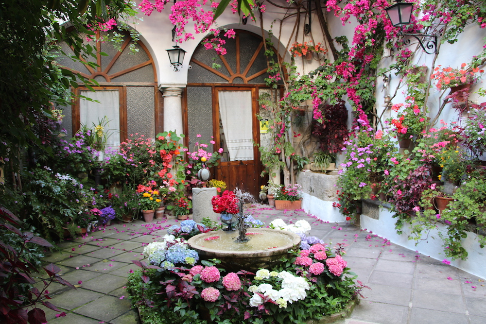 Cordoba patio festival flowers 2