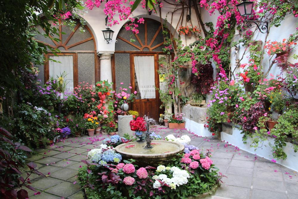 Cordoba patio festival flowers 2