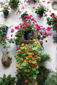 Cordoba patio festival flowers 3