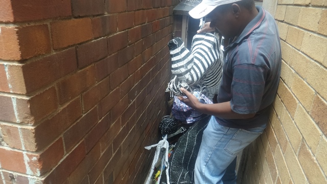 Telmore Masangudza carries a small zebra sculpture out from the where he stores his artworks in the block of flats where he lives in Rosebank.