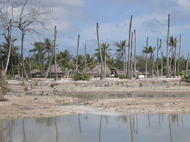 640px-Impacts_of_coastal_erosion_and_drought_on_coconut_palms_in_Eita,_Tarawa,_Kiribati