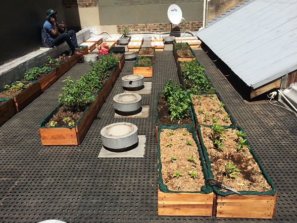 Jozi Food Farmer's Braamfontein rooftop garden. In this garden they grow a variety of things including mint, rocket, lettuce and basil.