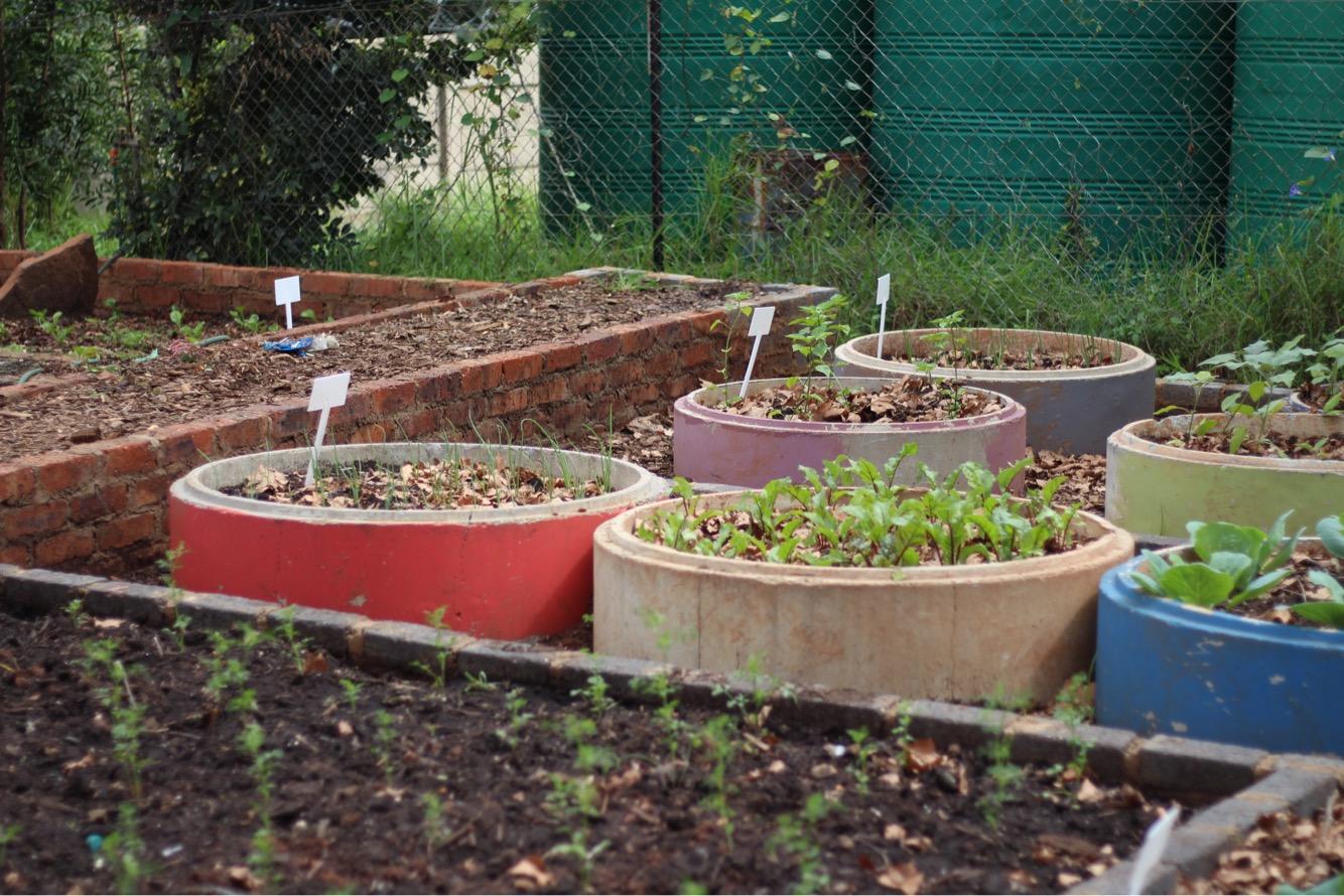 wits food garden