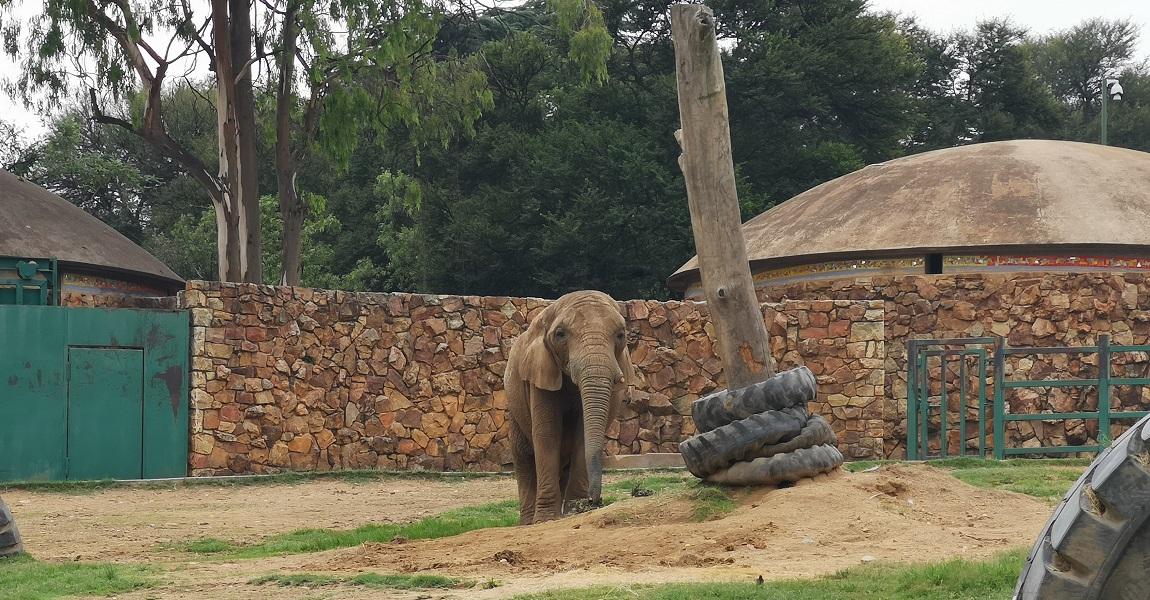 lammie the elephant